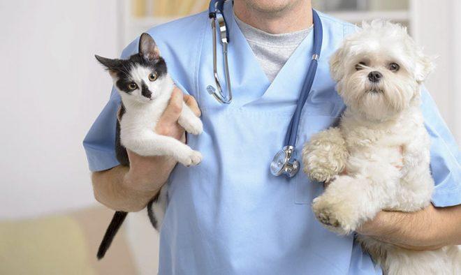 Вот они – самые типичные пациенты ветеринара