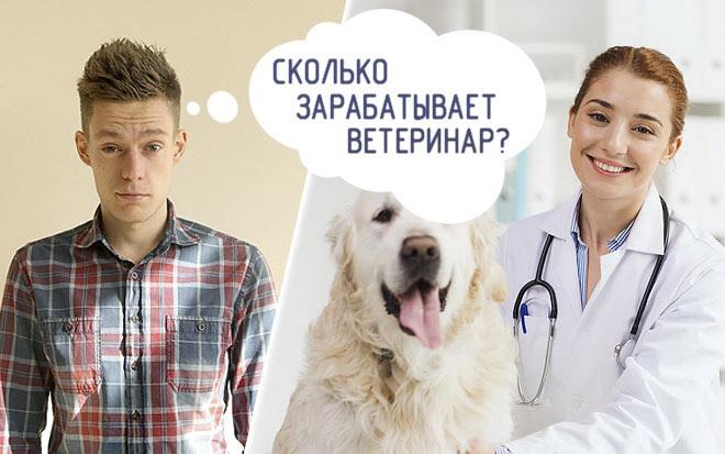Сколько получает ветеринар?